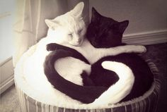 Love-ly cats!