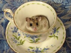 Those mischievous, wee mice - I did tell her she wasn't allowed to play in the tea cups!