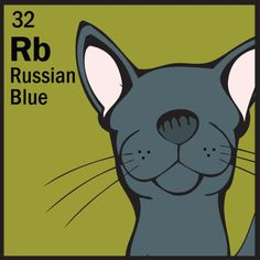 Elemental!  Russian Blue - looks like our little Dasha (Dash), named after the spunky heroine of my Galveston Hurricane Mysteries.