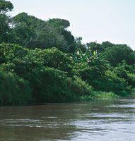 Las aguas del Bajo Magdalena crean en las orillas ambientes propicios para el desarrollo de una vegetación variada; en las zonas más alejadas pueden crecer árboles como el caracolí y el carreto, entre otros.