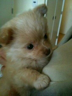 Um olhar inocente e um toque carinhoso desarma qualquer um♥♡♥
