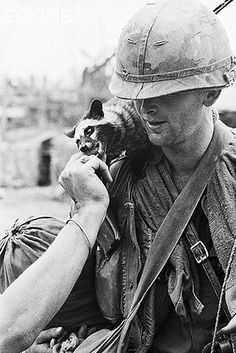 13 Mar 1968, Hue, South Vietnam --- Wartime Friendship. Hue, South Vietnam: U.S. 1st Cavalry Division medic Gary Kennon of San Francisco, Calif., gets a nip on the finger from his traveling companion, a raccoon, during operations in village near Hue March 13th. --- Image by © Bettmann/CORBIS