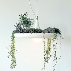 Hanging Lamps to Glow and Grow