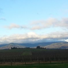 #Shadow on the #hills #nofilter #winery