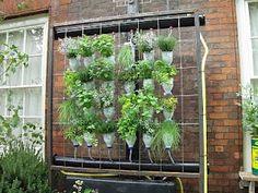 Vertical gardening takes up less space and is very flexible as to location. Consider this for an apartment balcony. It is a herb garden, planted in old javex bottles, with an irrigation system built in from rain water collection. For a herb garden! Reuse Plastic Bottles, Recycled Bottles, Plastic Bottle Art, Bottle Garden, Vertical Gardens, Diy Hanging, Hanging Pots, Herb Garden, Gutter Garden