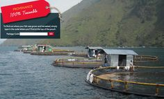 Bumble Bee SuperFresh is 100% traceable. Find where your fish was sourced. #bbsuperfresh