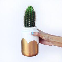 DIY pickle jar cacti planter