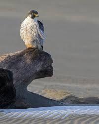 national wildlife magazine - Google Search