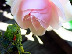 But no matter how hectic life gets, make sure to stop and smell the roses. 20 Life Lessons We Can Learn From Turtles And Tortoises Tortoise Care, Tortoise Turtle, Tortoise Habitat, Turtle Cage, Spotted Turtle, Funny Animals, Cute Animals, Baby Animals, Turtle Habitat