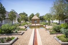 Nature's Apothecary - The Healing Garden at Babylonstoren in South Africa