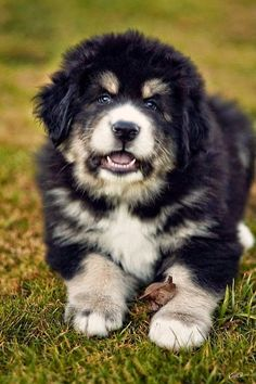 DOGS: The Tibetan Mastiff is one of the most protective dog breeds. This breed is famous for not liking anyone else except their family. Originally kept inside during the day and then turned out at night, they are quite well mannered inside, though extremely independent and not to be trusted off leash outside unless confined. http://www.dunway.com