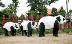Pandaphants!