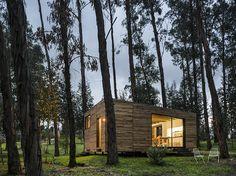 Dwars door het dak van dit ecologische huis groeit een dikke boom