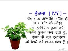 Best indoor plants in Hindi Save Tree Save Earth, Indore Plants, Best Indoor Plants, Herbs, Make It Yourself, Herb, Medicinal Plants