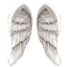 angel wings wings-and-feathers