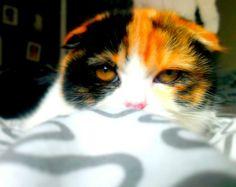 Lieblingskatze Cats, Animals, Gatos, Animales, Animaux, Animal, Cat, Animais, Kitty