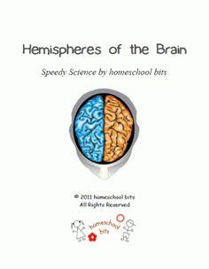 Hemispheres of the Brain - Speedy Science - homeschool bits      speedy scienceCurrClick