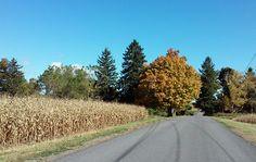 You'll drive through beautiful fall foliage on your way to rural studios. Rural Studio, Community Art, Trail, Studios, Country Roads, Artist, Beautiful, Studio, Amen