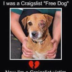 NOW IM A CRAIGS LIST VICTIM.   Don't get rid of your animals through classifieds as FREE! Can you say animal cruelty, dog fighting bait, beastiality, lab testing, snake food ... Need i say more ?