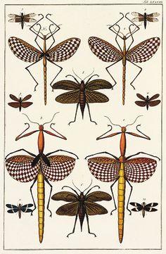 1-4 Walking stick (Phasmatodea); 5-6 katydids (Ensifera); 7-12 dragonflies (Odonata)