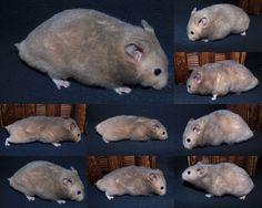Hamster Habitat, Hamster Life, Hamsters, Rodents, Syrian Hamster, Small Animals, Dark Colors, Polar Bear, Habitats