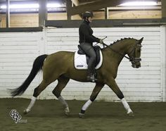 Avatar | Dressage Horses For Sale | DressageMarket.com