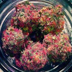 Pink nugs #prop215 #california