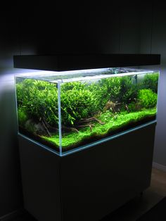 aquascape-july2012-e