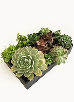 Cape Peninsula Flower & Gift Delivery for all occasions. Gift Delivery, Cape, Succulents, Box, Flowers, Plants, Gifts, Mantle, Cabo