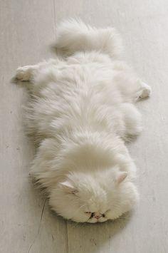 Man, I can't wait to nap ... tomorrow!