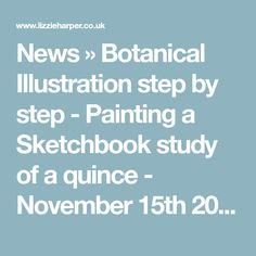 News » Botanical Illustration step by step - Painting a Sketchbook study of a quince - November 15th 2013 – Lizzie Harper Illustration ¦ Botanical Illustration & Scientific Illustration by Lizzie Harper