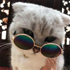 Cool cat sunglasses for your cat - cats love life - cats -. - Cool cat sunglasses for your cat – cats love life – cats – … – cats – - Cute Baby Cats, Cute Cats And Kittens, Cute Funny Animals, Cute Baby Animals, Cool Cats, Kittens Cutest, Funny Cats, Gatos Cool, Cute Cat Wallpaper