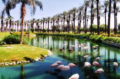 Oasis of flamingos in Palm Desert, California - By Yousef - Pixdaus Palm Desert California, Southern California, Places To See, Places Ive Been, Lime Wedding, Desert Colors, Palm Springs, Wonderful Places, Oasis