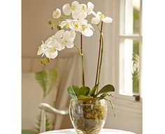 Only nature could create something quite as lovely as an orchid. Those perfectly shaped petals, almost translucent in their delicacy. The graceful stems arching Silk Flowers, Paper Flowers, Artificial Orchids, Orchid Arrangements, Company Gifts, Phalaenopsis Orchid, Centre Pieces, Flower Centerpieces, House Plants