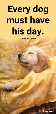 Every dog must have his/her day! Agree?