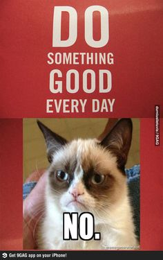 Grumpy cat motivation for every day