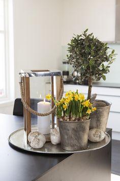 Pynt til påske med Narciss og oliventre
