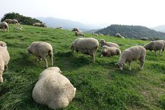 #Daegwanryeong  sheep ranch with my family during Summer holiday!