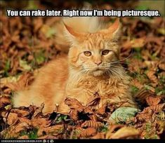 20 Cute and Funny Animal Fall Pictures You'll Love More than PSL #fallmemes #cutememe #cuteanimals #funnyanimals #animalmemes Funny Cat Memes, Funny Cats, Funny Animals, Cute Animals, Funny Horses, Baby Animals, Crazy Cat Lady, Crazy Cats, I Love Cats