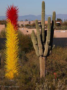 Art vs. Nature - Chihuly Exhibit, Desert Botanical Garden, Phoenix, AZ