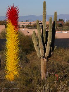 Chihuly Exhibit, Desert Botanical Garden, Phoenix, AZ