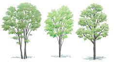 樹木の便利なレイヤ分けで春夏秋冬イメージに: 手描き添景素材スケッチプラス