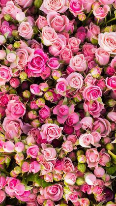 36 Ideas For Garden Rose Bouquet Pink Pretty Flowers