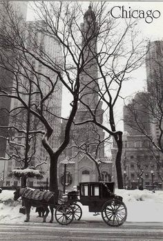 Chicago Water Tower on Michigan Avenue - Horse & Carriage - Black and White Picture, Photo, Image Visit Chicago, Chicago City, Chicago Illinois, Chicago Skyline, Skyline Art, Chicago Bears, Chicago Photography, City Photography, Chicago Water Tower