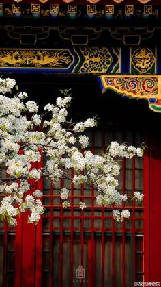 Apricot and pear flowers enter full bloom in the Imperial Palace, or the Forbidden City, in Beijing, capital of China, March 31 and April (Photo/Official Weibo of Forbidden City) The. Asian Architecture, Cultural Architecture, Chinese Culture, Japanese Culture, Chinese Style, Chinese Art, Asian Photography, Peking, Chinese Element