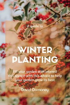 Winter borders can be a joy to look at. Winter planting with bright coloured stems, seed heads from summer flowering plants, fresh winter flowers and evergreen shrubs all contributing to a colourful, interesting garden. Summer Flowers To Plant, Winter Flowers, Winter Colors, Planting Flowers, Flowering Plants, Growing Onions From Seed, Growing Seeds, Vegetable Planting Calendar, Planting Vegetables