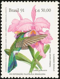 White-vented Violetear stamps - mainly images - gallery format