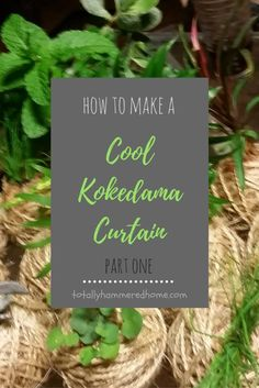 The first part of our Kokedama Curtain construction! Kokedamas are an excellent space-saving way to introduce plants into your home. Do It Yourself Projects, Permaculture, Just Do It, Easy Diy, Curtains, Balls, Cool Stuff, Plants, How To Make
