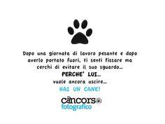 Hai un cane se..... www.cancorso.it cancorso2013, cancorso, cani, cane, concorso, concorsi, contest, ilmessaggero, quotidiano, animali, storie, canstorie, coppie, cancoppie, citazioni, aforismi