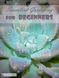 Succulent Gardening for Beginners - start your own succulent plant obsession... Succulents | Growing Succulent Plants